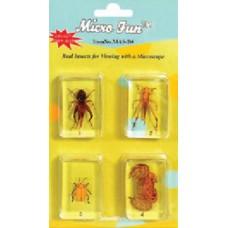 4 real bugs encased in acrylic block