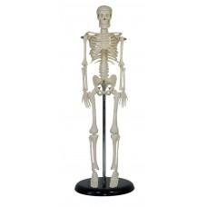 Human skeleton mini 45cm